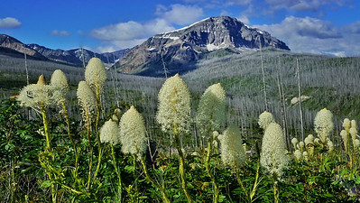 The Palouse and Glacier National Park