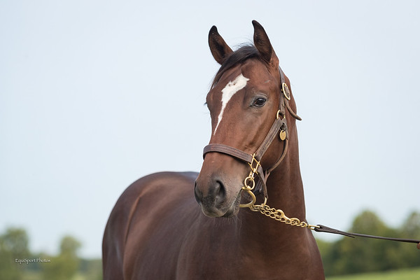 KEE#2326 Point of Entry - Quiet Royal '19 at Winter Quarter 9.15.20.