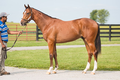 KEE#3706 Silent Name - Gold Lined for Cara Bloodstock 9.16.20.