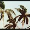 Garden of the Grove, Freeport, Bahamas