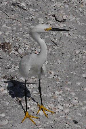 Bird in Sanibel Island, Florida