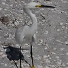 Bird in Sanibel Island, Florida