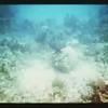 Nassau Underwater