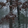 D012-2018<br /> Falling snow, taken from my front porch<br /> <br /> Ann Arbor, Michigan<br /> Taken January 12, 2018
