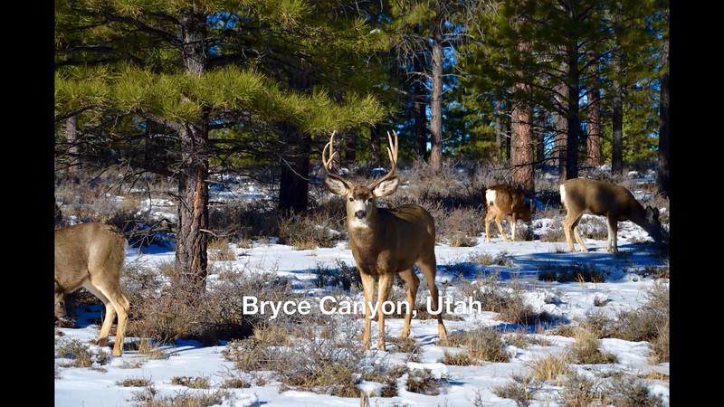 Bryce Canyon December 2015