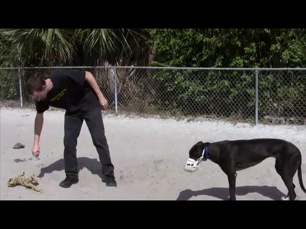 Adopting a Greyhound Series: Greyhound Pets of America<br /> Chapter President: Barbara Masi