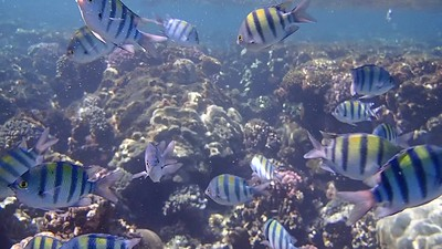 VIDEO Red Sea Diving March 2020