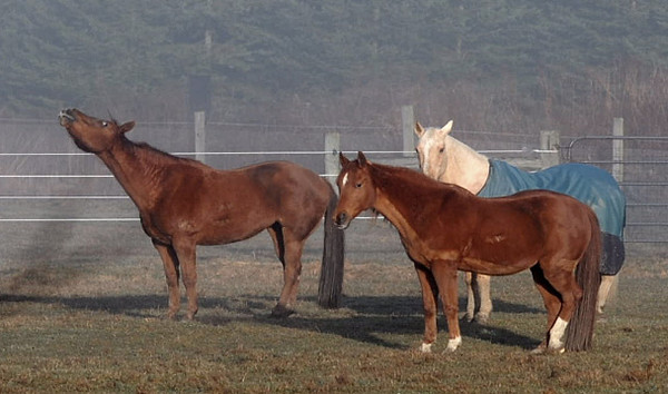 """<div class=""""jaDesc""""> <h4>Horses on Foggy Morning - May 30, 2010 - Video Attached</h4> <p>Our horses were relaxing in the pasture on a foggy morning.  Shiloh on the left was sniffing the moist air while Bronzz and Sapphire were dozing.</p> </div> <center> <a href=""""http://www.youtube.com/watch?v=r3C6qbyoKgY""""  style=""""color: #0000FF"""" class=""""lightbox""""><strong> Play Video</strong></a>"""