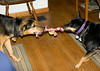 """<div class=""""jaDesc""""> <h4> Coby and Hope Playing Tug of War - June 8, 2009 - Video Attached</h4> <p> Our rescue dog Coby has now been with us for 4 months.  He loves it when another dog comes to visit.  He and Hope, another rescue, are very compatible playmates.  Hope grabbed one of Coby's toys and within minutes they were engaged in a playful, friendly game of tug of war.</p> </div> <center> <a href=""""http://www.youtube.com/watch?v=0knN0vsKvbc""""  style=""""color: #0000FF"""" class=""""lightbox""""><strong> Play Video</strong></a>"""