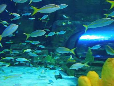 The Dangerous Reef