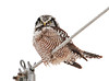 """<div class=""""jaDesc""""> <h4> Northern Hawk Owl Close-up - February 8, 2011 - Video Attached</h4> <p> This Northern Hawk Owl's favorite perch was a utility wire that ran between an open field and the backyards of several houses.  He would rotate his head back and forth, keeping an eye on both the field and the yards.</p> </div> </br> <center> <a href=""""http://www.youtube.com/watch?v=NGBU_sDDCCI&feature=youtu.be"""" class=""""lightbox""""><img src=""""http://d577165.u292.s-gohost.net/images/stories/video_thumb.jpg"""" alt=""""""""/></a> </center>"""