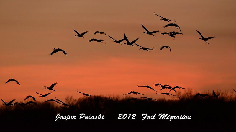 Sandhill Cranes At Jasper Pulaski
