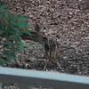 Mama Love Deer and Her Precious Baby - June 2, 2015<br /> It's Bath Time!