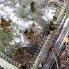 Diving Beetles and Snails - What's in Our Pond Day