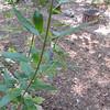 Praying Mantis Dance 9-19-10