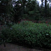 Audio:  Sounds of Morning in Front Yard - 6/17/13 at 5:37 AM