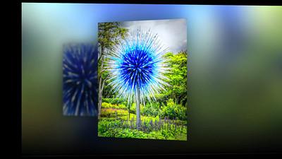 Dallas Arboretum Chihuly Glass Exhibit- shortened version