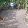 Lyman Orchard's Corn Maze