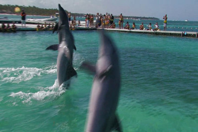 Here is the final video of Swiming with Dolphins that TK and I shot in Feb.  TK makes the cut!