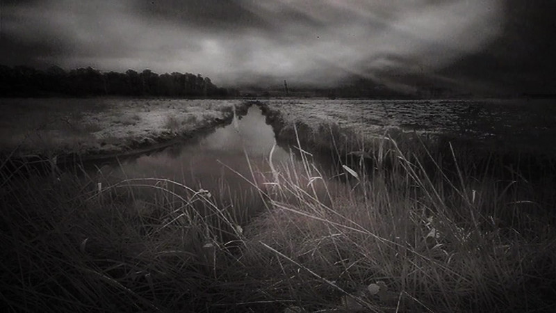 Marshes 4