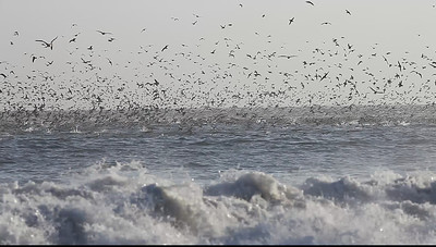 Blacks Beach, Santa Cruz, California