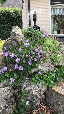 Watering system on tufa column with physoplexis comosa