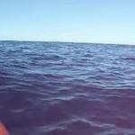 Shark off of Keahou, Big Island of Hawaii