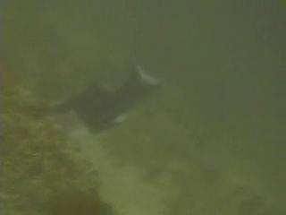 La Jolla Shores Dive 8.11.09