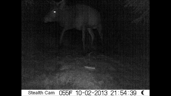 Deer Videos