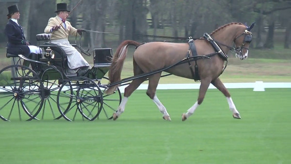 updated video - dressage video added