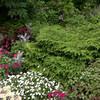 Glacier Gardens Rainforest
