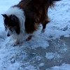 Divx to mp4 Angel sheltie during snow/ice 2-2009
