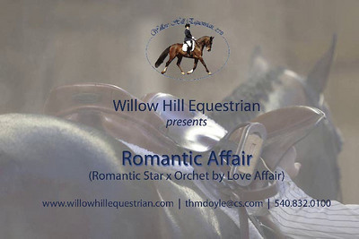 Romantic Affair (Romantic Star x Orchet by Love Affair). Offered for sale by Willow Hill Equestrian in Gordonsville, VA. www.willowhillequestrian.com