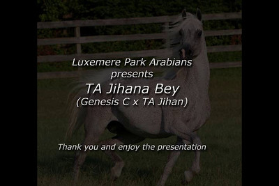 TA Jihana Bey, beautiful exotic purebred Arabian mare owned by Luxemere Park Arabians. http://luxemere.com/
