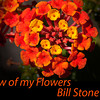 A few of my flowers: A Video by Bill Stone