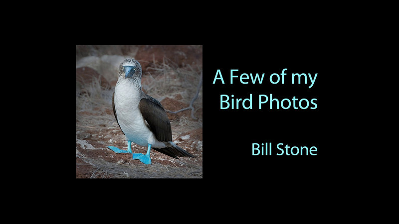 A few of my Bird Photos: A Video by Bill Stone