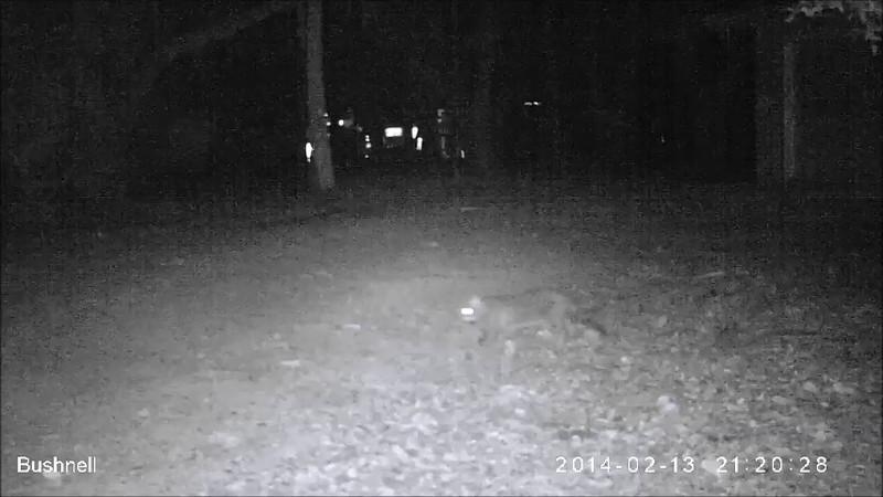 Stray cats, 02/13/14 - 04/02/14