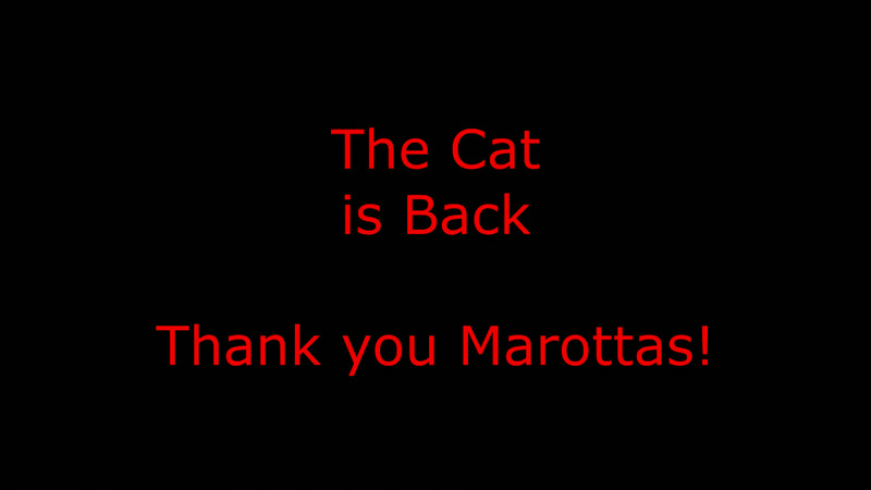 The Cat is Back!