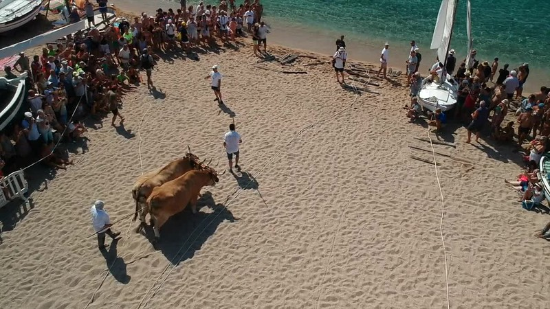 Treta amb bous