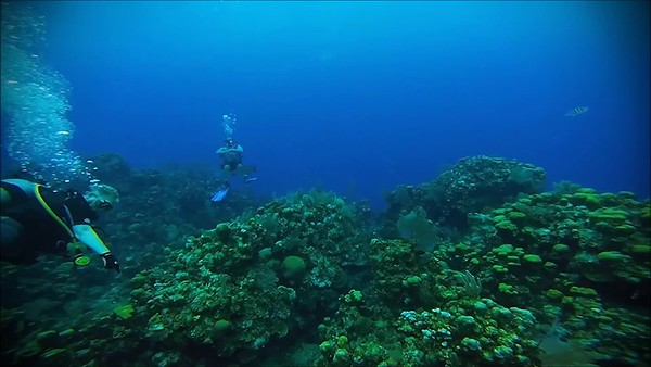 Diving in Roatán (Part 1)