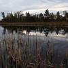Subtle Spring - Nixon Lake (Northern Highland American Legion State Forest - Wisconsin)