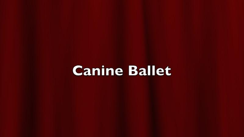 Canine Ballet