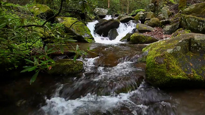Preeminence - Roaring Fork Motor Trail (Great Smoky Mountains National Park)