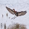 Birds of California: Bolsa Chica Ecological Reserve