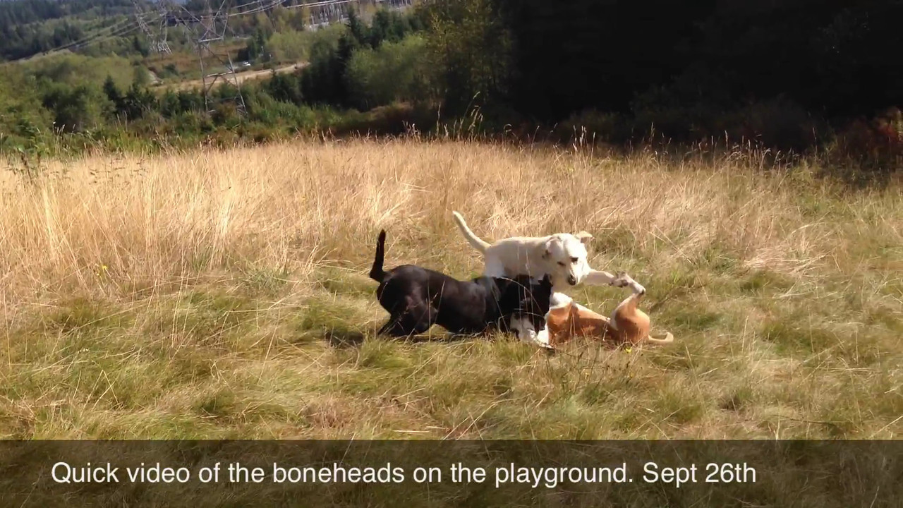 SEPTEMBER 26th 2012<br /> QUICK VIDEO ON THE PLAYGROUND