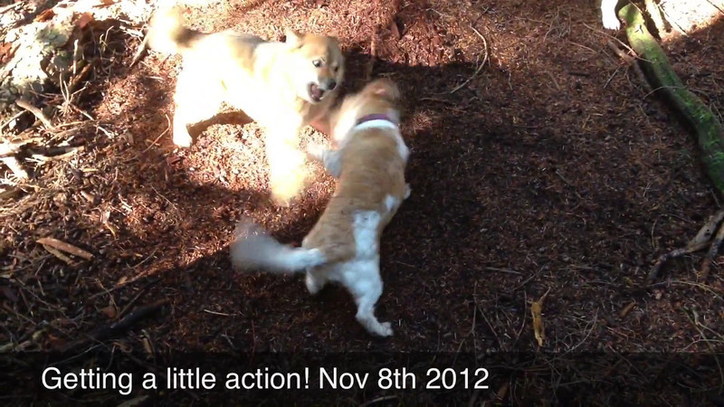 NOVEMBER 8TH 2012<br /> GETTING A LITTLE ACTION!