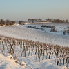 "Vineyards at the ""Nussberg"", Vienna, Austria"