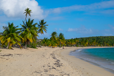 Bay Palms