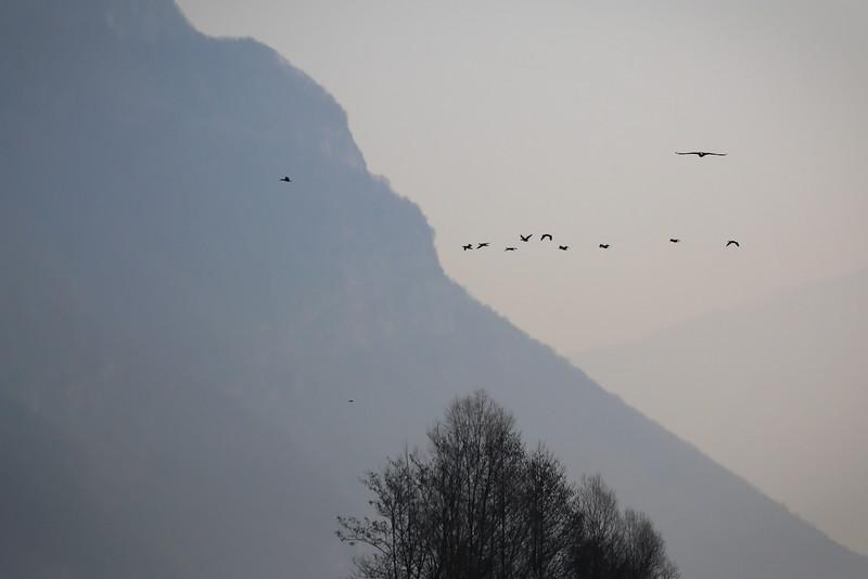 Le soleil arrive : les cormorans à l'envol