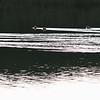 Maman Canne et ses petits au Lac des Fées, Beaufortain